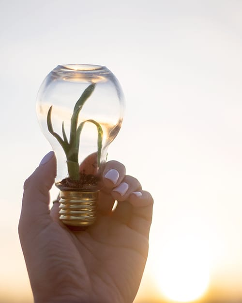 environmental sustainability experiment in a light bulb